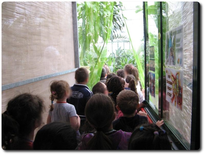 bordano museo delle farfalle