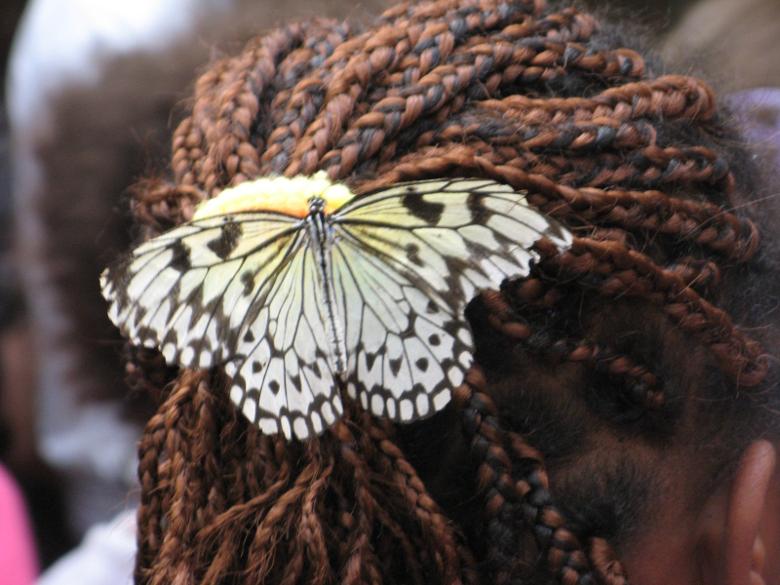 farfalla trecce