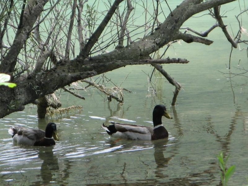 germani lago Cavazzo
