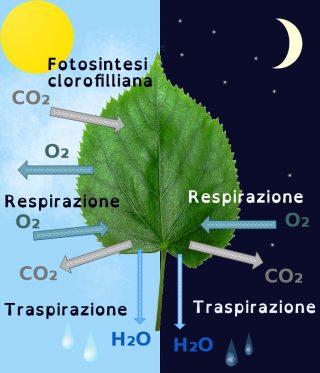 funzioni piante